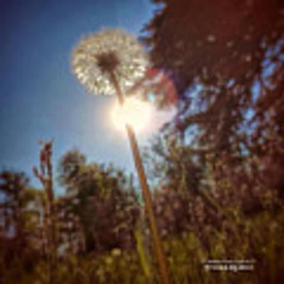 A Shiny Flower Day Poster by Stwayne Keubrick