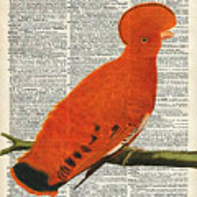 American Martinet Orange Parrot Bird Poster by Anna W