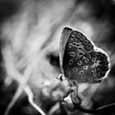 Butterfly In Black And White Poster by Mirko Chessari