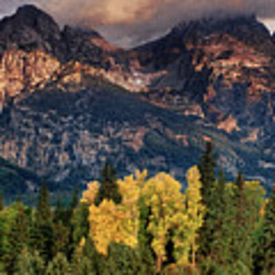 Cottonwoods Fir Trees Fall Color Grand Tetons Nat Poster by Dave Welling