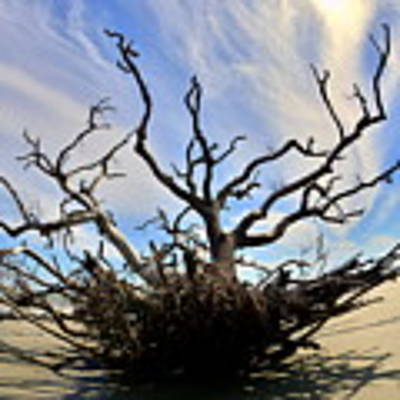 Driftwood And Roots Hunting Island Sc Poster by Lisa Wooten