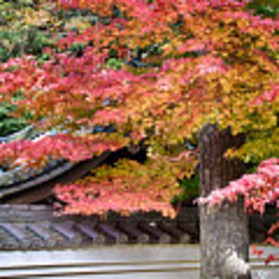 Fall In Japan Poster by Tad Kanazaki
