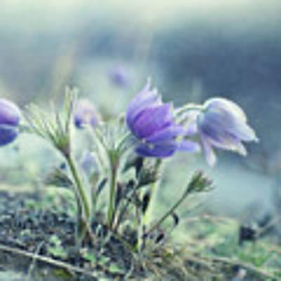 Finally Spring Poster by Priska Wettstein
