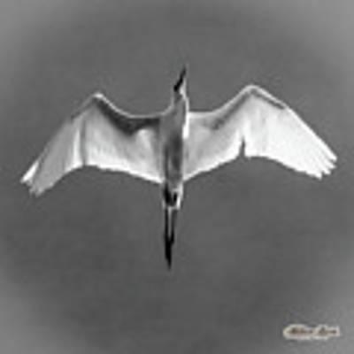 Flight Poster by William Havle