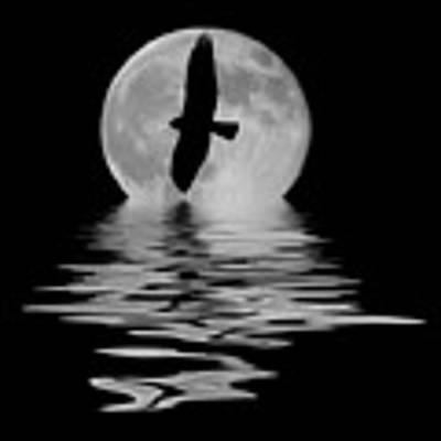 Flying Hawk 2 Poster by Shane Bechler