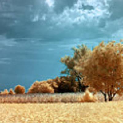 Golden Summerscape Poster by Helga Novelli