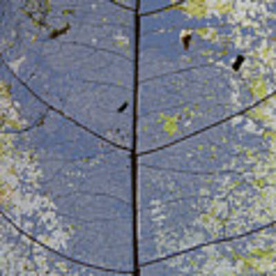 Leaf Structure Poster by Debbie Cundy