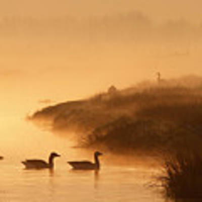 Magical Misty  Morning Poster
