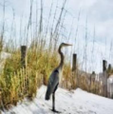 Norriego Point Heron Poster by Mel Steinhauer