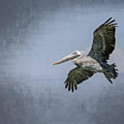 Pelican Flight Poster by Carolyn Marshall