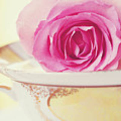 Pink Rose And Teacup Poster by Kim Fearheiley