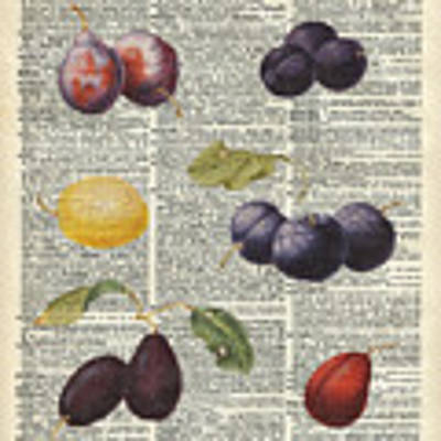 Plums Vintage Illustration Over A Old Dictionary Page Poster by Anna W