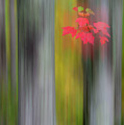 Red Leaves - Abstract Poster by Gary Lengyel