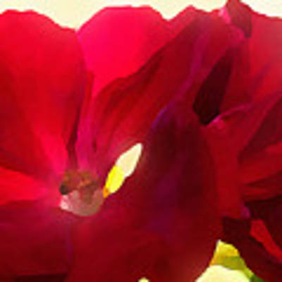 Red Velvet Twin Geraniums  Poster by Shelli Fitzpatrick