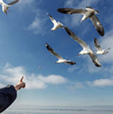 Seagull Flying Poster by Pradeep Raja PRINTS