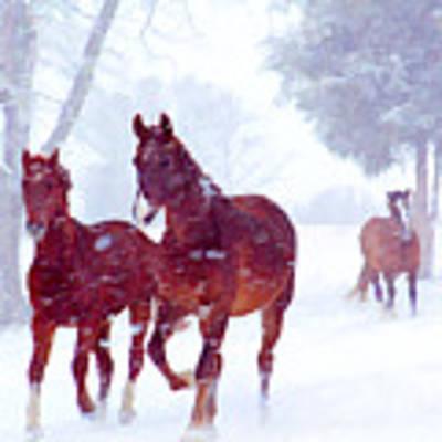 Snow Run Poster by Sam Davis Johnson