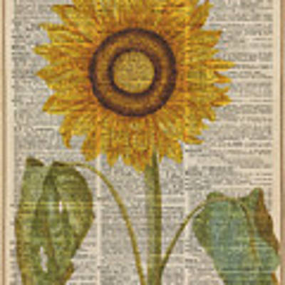 Sunflower Over Dictionary Page Poster by Anna W