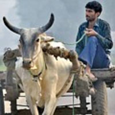 The Bullock Cart - India Poster by Kim Bemis