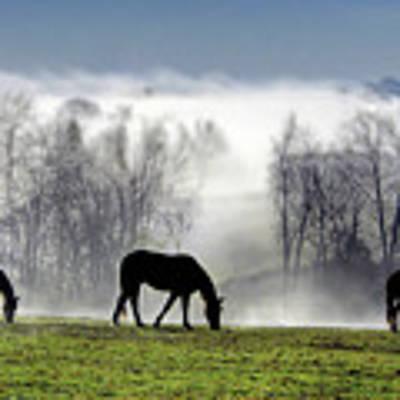 Three Horse Morning Poster by Sam Davis Johnson