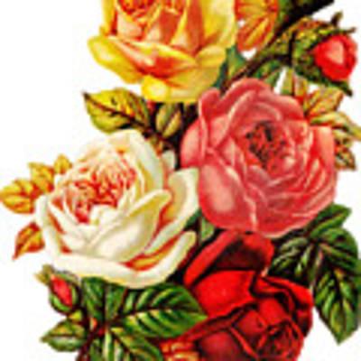 Vintage Rose I Poster by Kim Kent