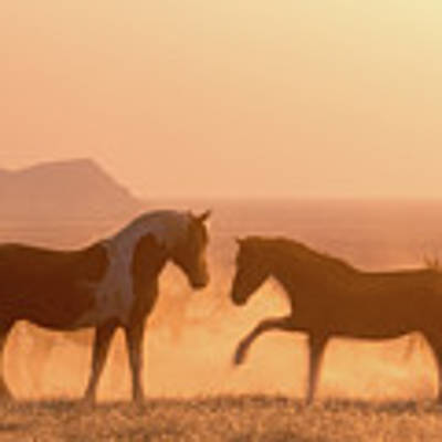 Wild Horse Glow Poster by Wesley Aston