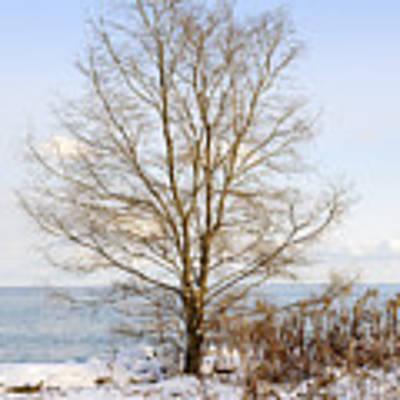 Winter Tree On Shore Poster by Elena Elisseeva