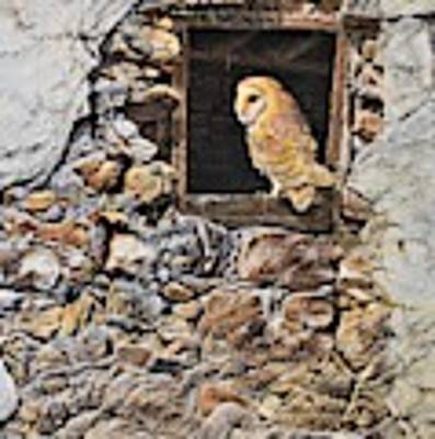 A New Home Barn Owl Poster by Alan M Hunt
