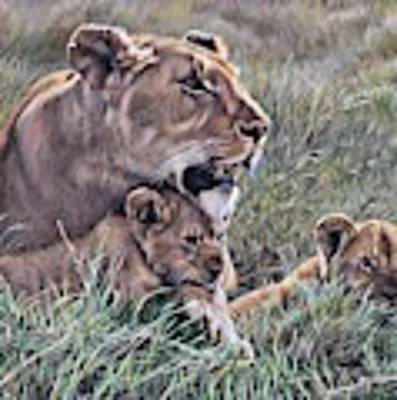 A Quiet Moment Lioness And Lion Cubs Poster by Alan M Hunt