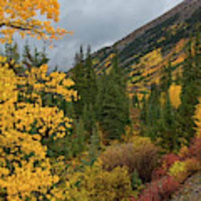 Autumn Splendor Poster by Darlene Bushue