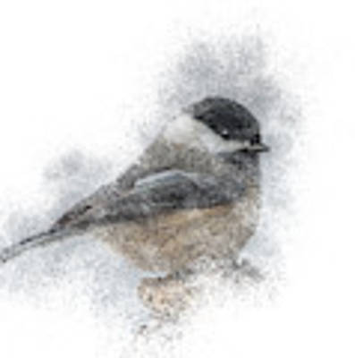 Black-capped Chickadee Perch Poster by Patti Deters
