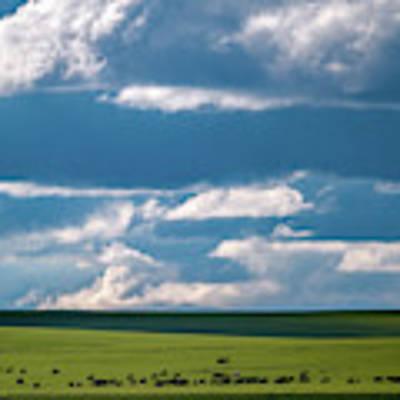 Cattle On The Flint Hills Prairie Poster by Jeff Phillippi