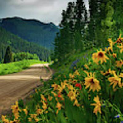 Colorado Wildflowers Poster by John De Bord