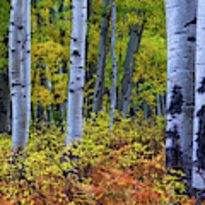 Colors Of October Poster by John De Bord