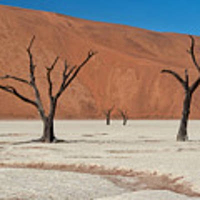 Deadvlei Namibia  Poster by Rand
