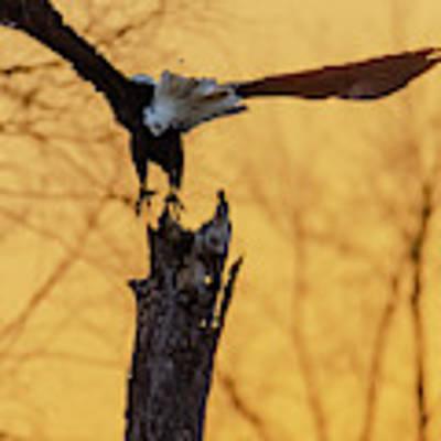 Eagle Flying Off Poster by Steven Santamour