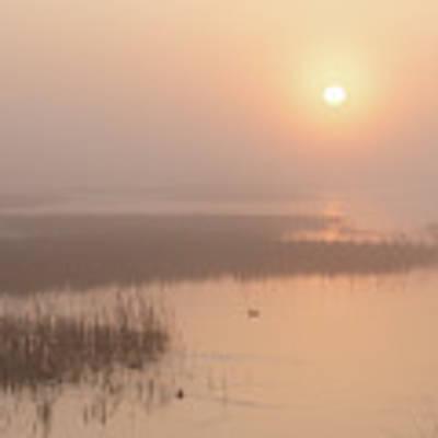 Foggy Sunrise At Cheyenne Bottoms -02 Poster by Rob Graham