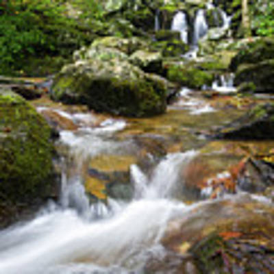 Hogcamp Branch Falls I Poster by William Dickman