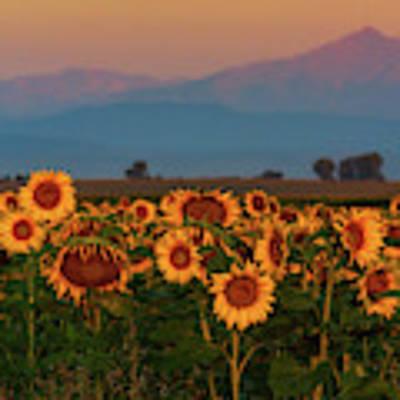 Light Of The Sunflowers Poster by John De Bord