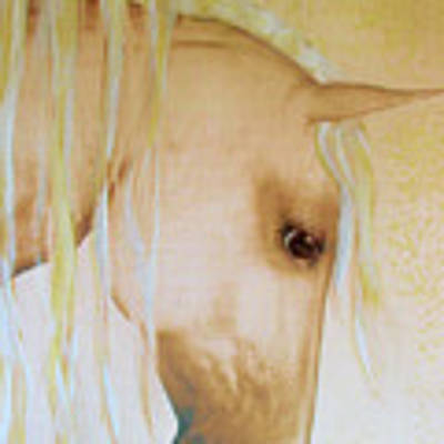 Palomino Head Study Poster by Valerie Anne Kelly