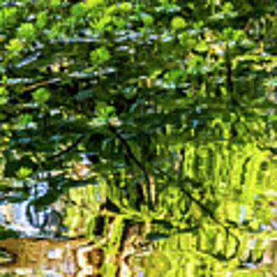 Reflections In Green Poster by Kate Brown