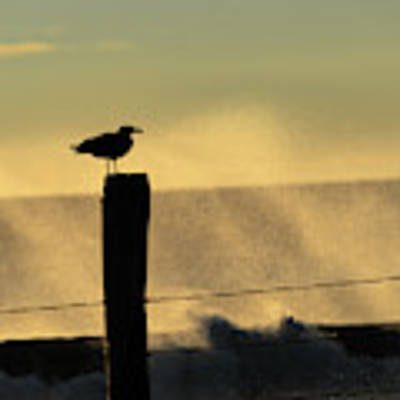 Seagull Silhouette On A Piling Poster by William Dickman