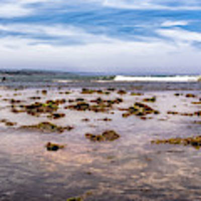 Seaweed At Low Tide Poster by Alison Frank
