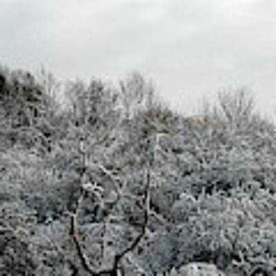 Snow Covered Trees Poster by Rose Santuci-Sofranko