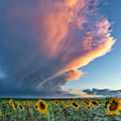 Storm Clouds And Sunflowers  Poster by Rand