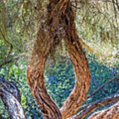 Strange Tree Poster by Kate Brown