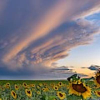 Sunflowers And Storm Clouds Poster by Rand