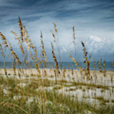 Through The Sea Oats Poster by Judy Hall-Folde