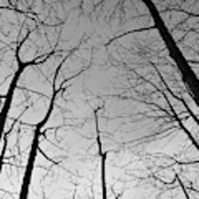 Tree Series 2 Poster by Jeni Gray