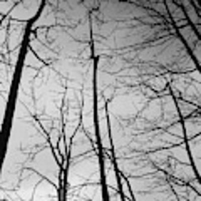 Tree Series 3 Poster by Jeni Gray