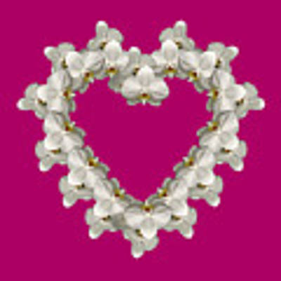 White Orchid Floral Heart Love And Romance Poster by Rose Santuci-Sofranko